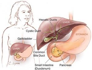 Gallbladder Graphic